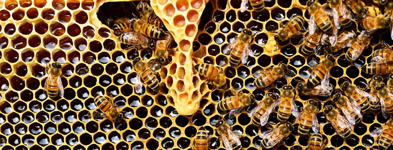 """Feast of Honey"" in the village of Malevo 2018"